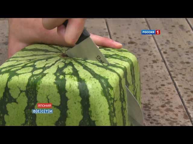 Квадратные арбузы Японии Square watermelons Japan 四角スイカ