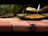 ТОП 5 САМЫХ СМЕРТЕЛНО ОПАСНЫХ ПАУКОВ МИРА TOP 5 MOST DANGEROUS SPIDERS OF THE WORLD