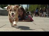The Chainsmokers - New York City (Dash Berlin Remix) HD-1080