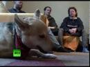 В Германии 100 тысяч зоофилов Их европейские ценности
