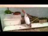Hamster gegen Karotte