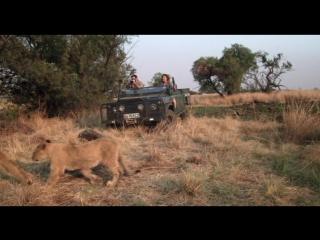 Африканское сафари - African Safari