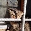 Смотрители придворных кошек