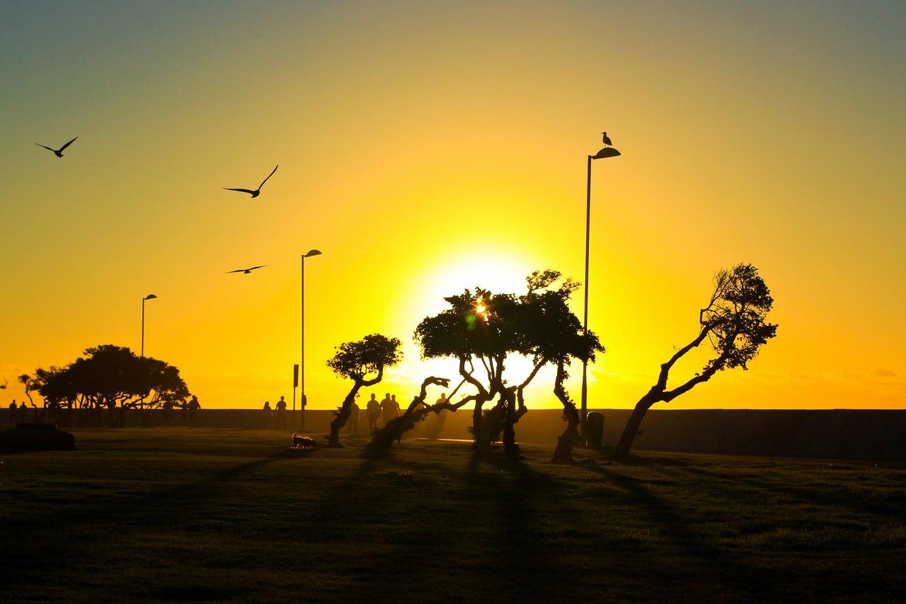 Силуэты деревьев на фоне яркого заката