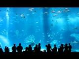 Гигантский аквариум в Окинаве.