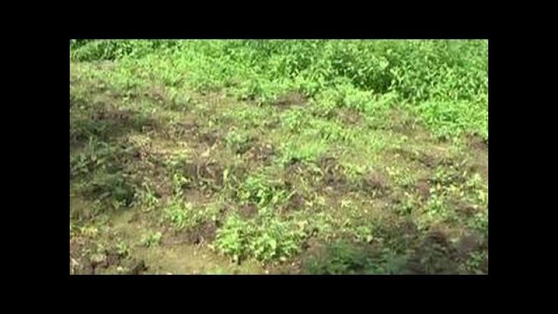 Семью грибников, нашедших в лесу плантацию конопли, расстреляли