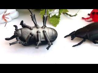 БИТВА жуков! Грубиян и хам! Мультик о насекомых. Для детей. Игрушки видео.