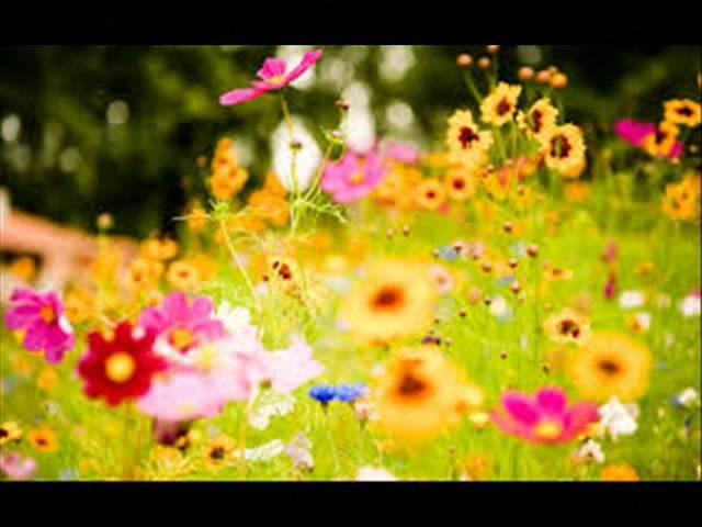 Chopin sonata in B minor Glen Gould