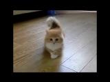 Самые смешные коты. Приколы с котами. Funny cats