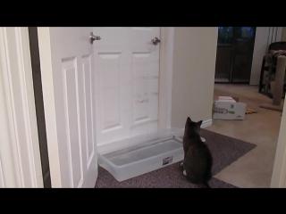 Это виртуоз, а не кот!! Малдер откроет любые двери!