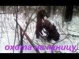 Охота на куницу с лайками 2016.