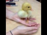 Gerard Way - duck Vine