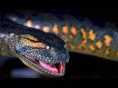 Документальный фильм.Гиганты мира животных 2 Самая большая змея(Документальный фильм о змеях