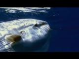 Самые Странные в Мире Животные . Чудаки в Океане National Geographic