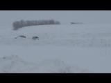 2WD спорт Шидло- Бабарыкин