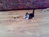 Кот против ящера с другой галактики