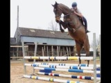 ARE U CRAZY - Horse fails/falls/fun