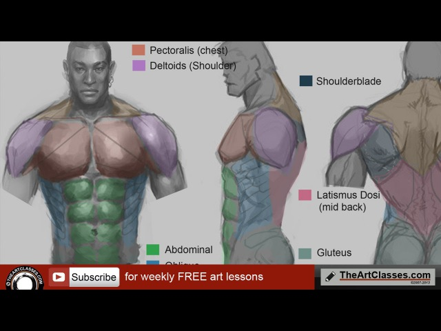 How to draw muscular body - torso anatomy drawing