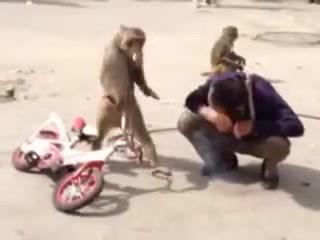 Гоп-стоп по обезьяне