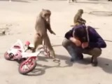 monkey ninja (6 sec)