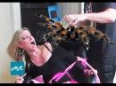 как ловить тарантула видео