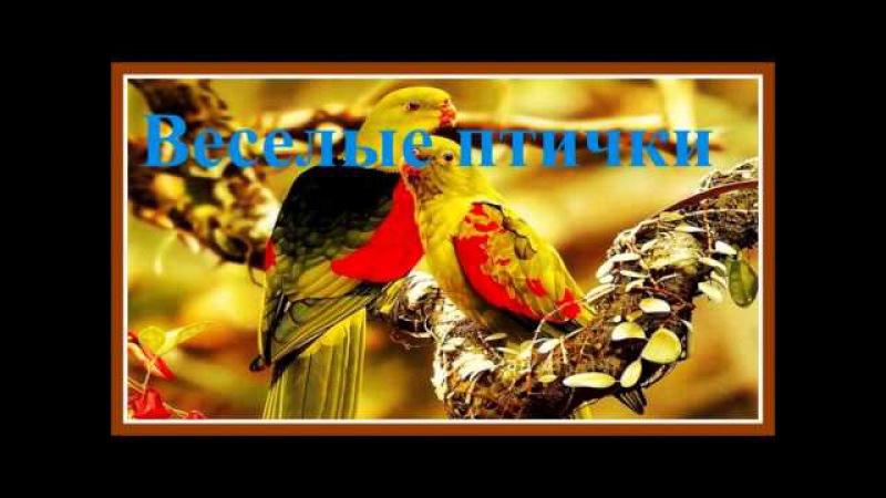 Веселое Пение Лесных птиц / Forest Birds Singing