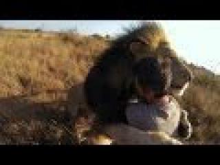 Гармония с природой Человек и Лев