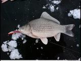 Зимняя рыбалка на карася на мормышку.Секреты ловля крупного карася.