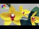 Cách làm hoa Lan Hồ Điệp bằng giấy nhún How to make Orchid paper