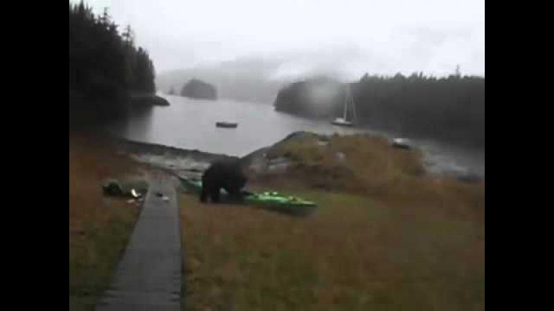 Девушка брызнула в морду медведю из перцового баллончика, но он нашел способ ей отомстить