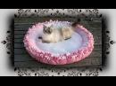 DIY 😻 XL Knoten Kissen Bett für Katzen Hunde | Knot cushion bed for Cats Dogs