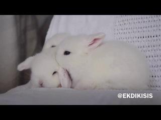 Крольчата ухаживают друг за другом