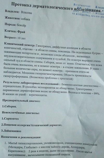 Москва, Фрай, кобель, 10+ - Страница 2 -TKPjH--DVk