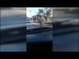 Эпидемия нудизма в Кызылорде. Голый мужчина разгуливает по улице