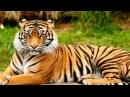 40 Животных и их голоса. Развивающие мультики для детей от 1 года