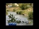 В донецких прудах обнаружили экзотических черных пираний