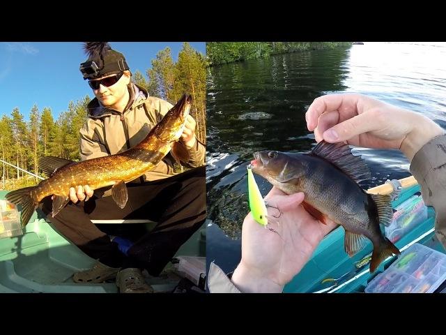 Hauen ja ahvenen kalastusta järvellä / Pike and perch summer fishing