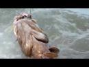Рыба МУТАНТ.Жесть