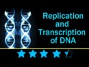 DNA replication | Learn About the Replication and Transcription of DNA (Deoxyribonucleic acid)