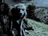 ОБОРОТНИ ЛИКАНТРОПИЯ волко-люди убивают людей уже 100-ни лет