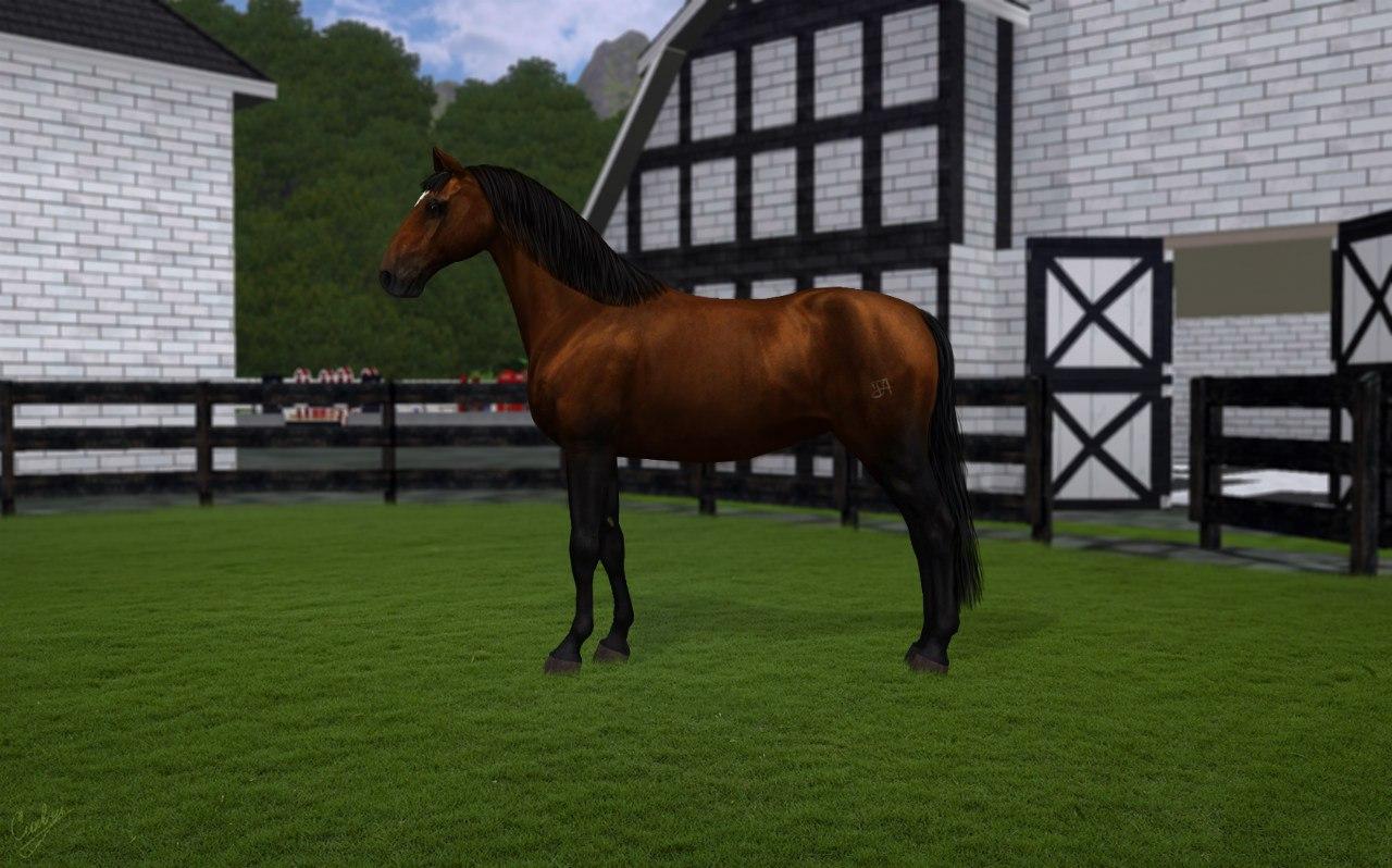 Регистрация лошадей в RHF 2 CdrliqluWgw
