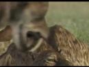 Сериал BBC Прогулки с чудовищами Walking with Beasts смотреть онлайн бесплатно 5
