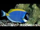 Рыбы и кораллы Красного моря.