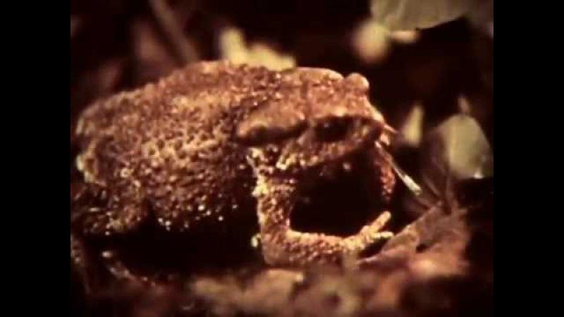 Природные сообщества. Леннаучфильм, 1986г.