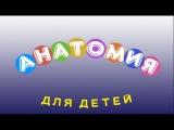 Анатомия для детей младшего школьного возраста  Развивающий мультфильм