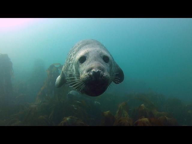 GoPro Seal Belly Rub