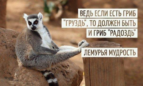 http://cs628524.vk.me/v628524703/28e8/y1ry7E40jgM.jpg