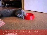Кошачий туалет у кошки Матрёшки.