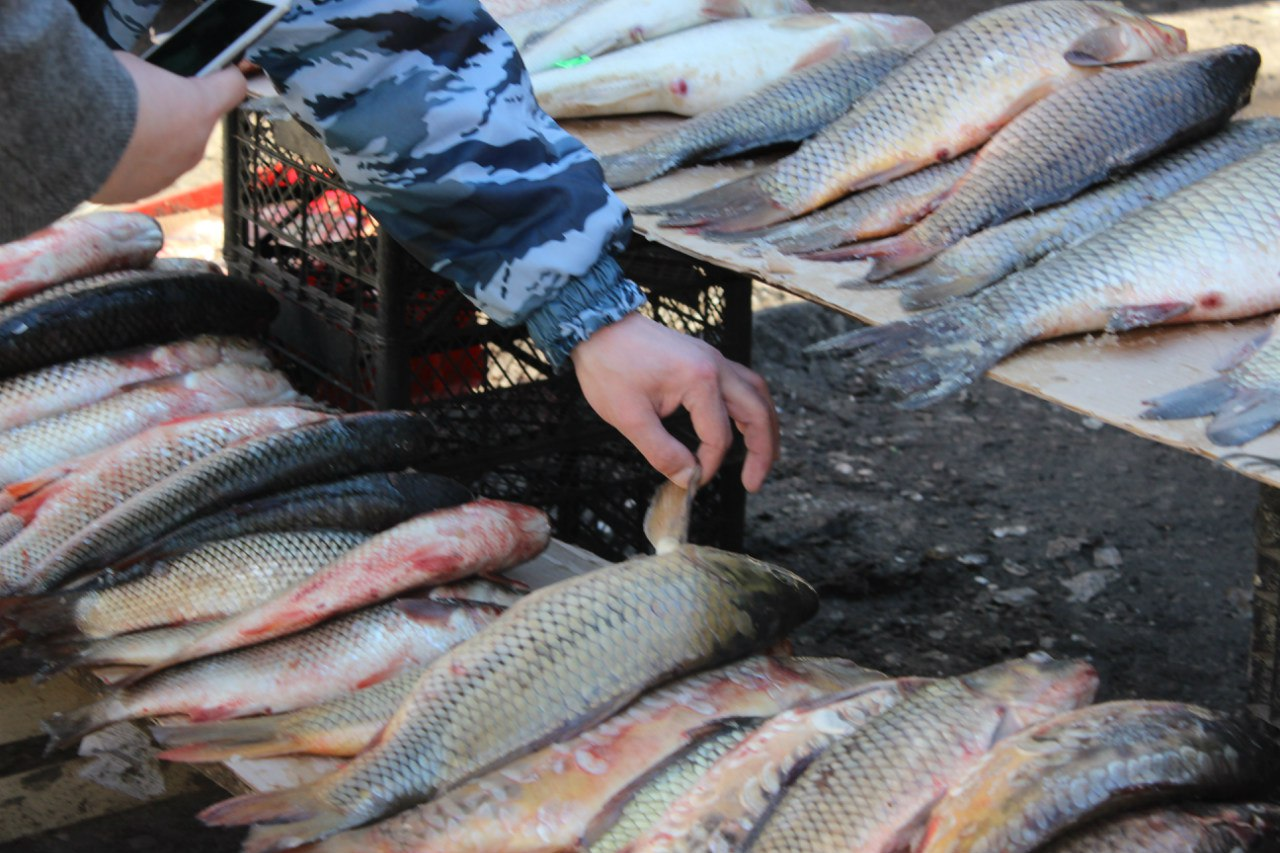 В Ростове ветинспекторы пресекли реализацию червивой рыбы из Таганрога