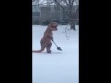 Ничего необычного, просто динозавр чистит снег